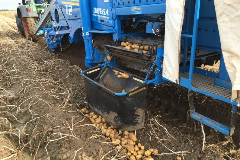 Standen T2 Potato harvester with windrow kit