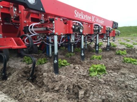 Steketee Cultivator with Curve Blade