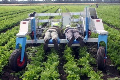 Thumbnail image for De Jongh Lay Down Self Propelled Weeders