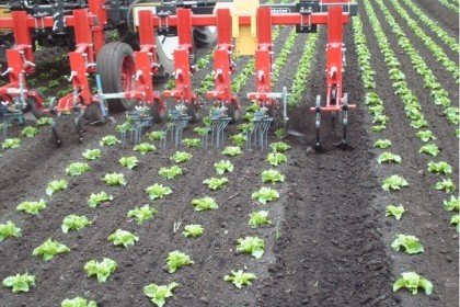 Thumbnail image for Steketee Inter Row Cultivators