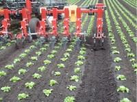 Steketee inter row cultivator